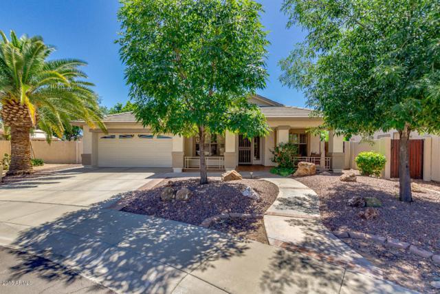 6659 W Oraibi Drive, Glendale, AZ 85308 (MLS #5753410) :: REMAX Professionals