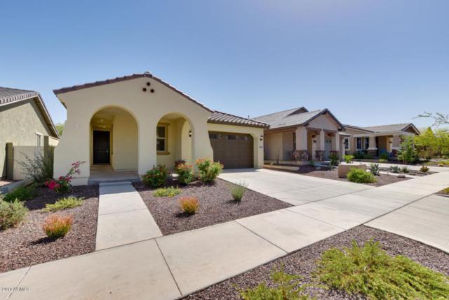 20833 W Elm Way, Buckeye, AZ 85396 (MLS #5754107) :: Occasio Realty