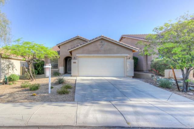 3766 W Blue Eagle Lane, Phoenix, AZ 85086 (MLS #5754164) :: RE/MAX Excalibur