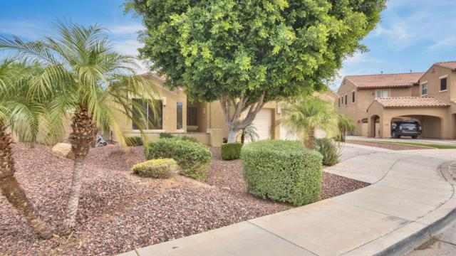 12908 W Segovia Drive, Litchfield Park, AZ 85340 (MLS #5754639) :: Kelly Cook Real Estate Group
