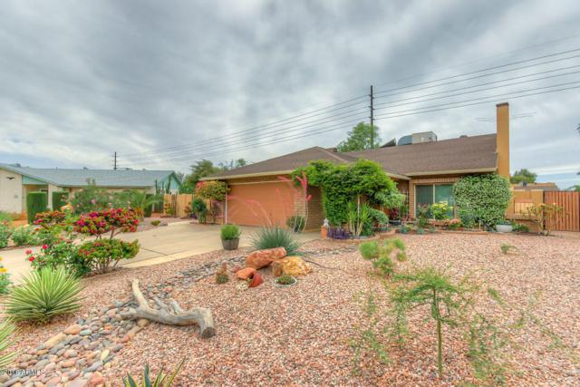 3118 N Yucca Street, Chandler, AZ 85224 (MLS #5756067) :: The Everest Team at My Home Group