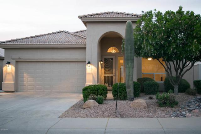 4558 E Roy Rogers Road, Cave Creek, AZ 85331 (MLS #5756612) :: The Daniel Montez Real Estate Group