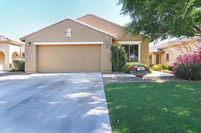 985 W Desert Canyon Drive, San Tan Valley, AZ 85143 (MLS #5761533) :: Yost Realty Group at RE/MAX Casa Grande