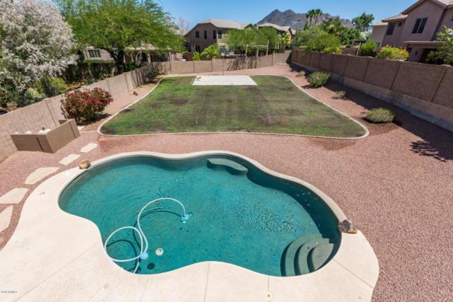 6030 E Palomino Lane, Scottsdale, AZ 85266 (MLS #5767310) :: Occasio Realty
