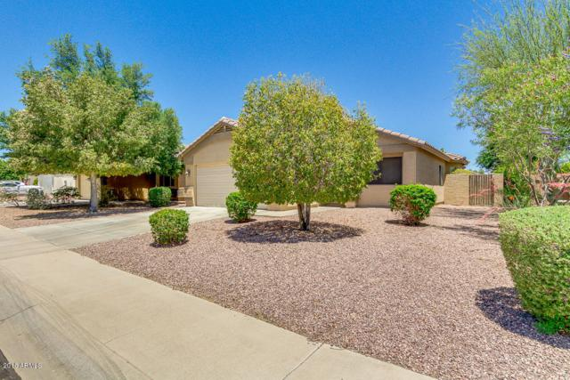 16407 N 138TH Avenue, Surprise, AZ 85374 (MLS #5769235) :: Brett Tanner Home Selling Team