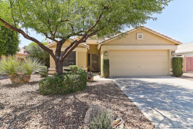 8925 W Quail Avenue, Peoria, AZ 85382 (MLS #5769838) :: The Laughton Team
