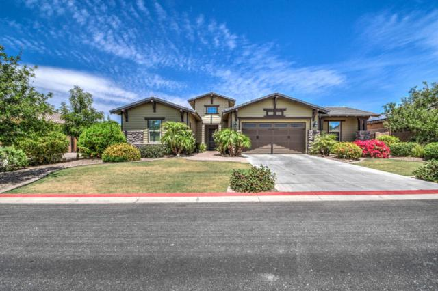 3664 E Ellis Street, Mesa, AZ 85205 (MLS #5770042) :: Yost Realty Group at RE/MAX Casa Grande
