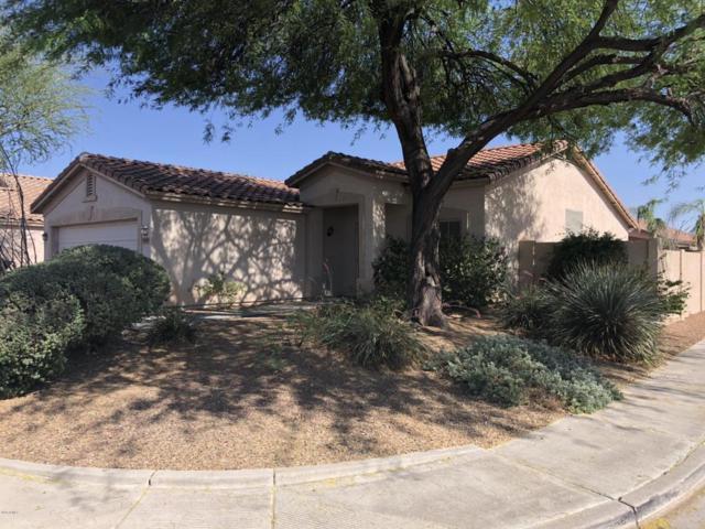 6969 W Juniper Avenue, Peoria, AZ 85382 (MLS #5770670) :: Power Realty Group Model Home Center