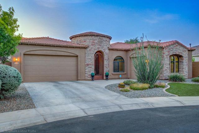 3370 E Lynx Place, Chandler, AZ 85249 (MLS #5770961) :: My Home Group