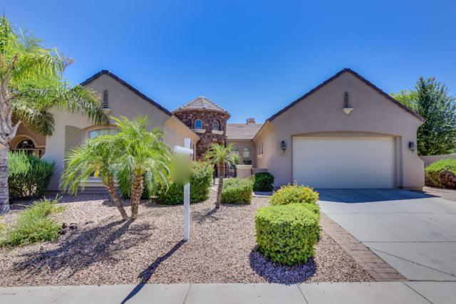 3663 E Nolan Drive, Chandler, AZ 85249 (MLS #5771694) :: Arizona 1 Real Estate Team