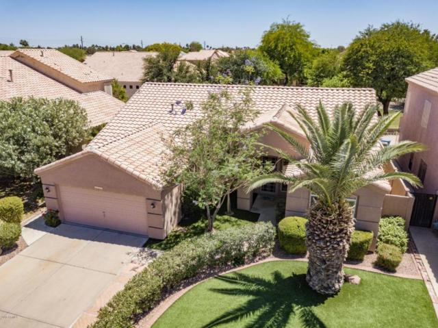 6089 W Megan Street, Chandler, AZ 85226 (MLS #5774152) :: The Jesse Herfel Real Estate Group