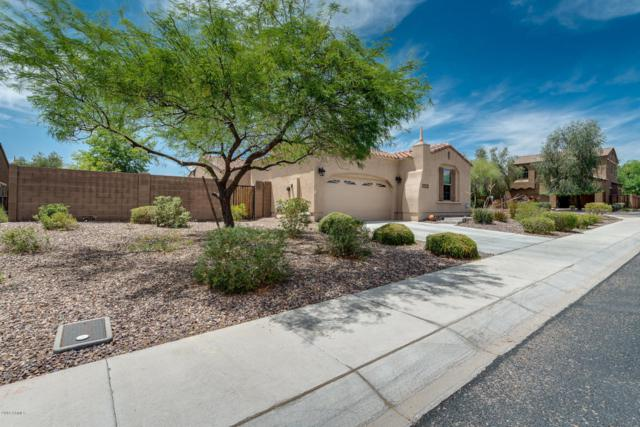 31132 N 136TH Lane, Peoria, AZ 85383 (MLS #5776830) :: My Home Group