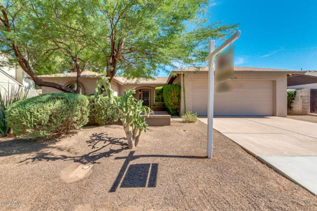 1229 W Citation Drive W, Chandler, AZ 85224 (MLS #5776879) :: My Home Group