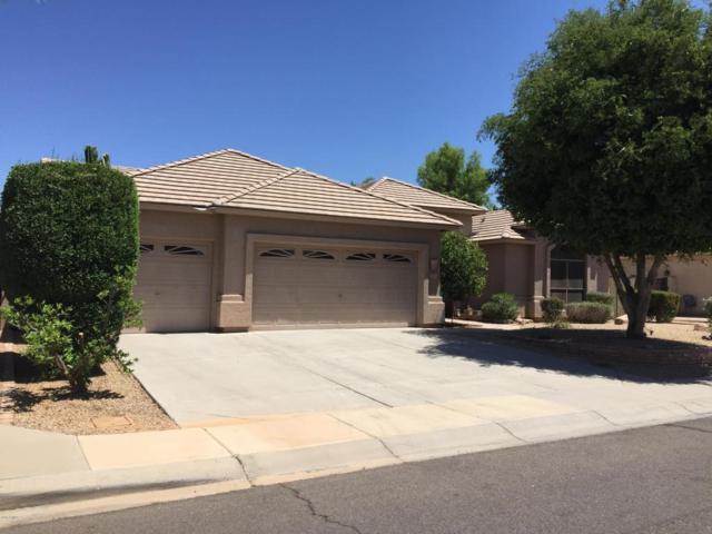 784 W Beechnut Drive, Chandler, AZ 85248 (MLS #5781601) :: Occasio Realty