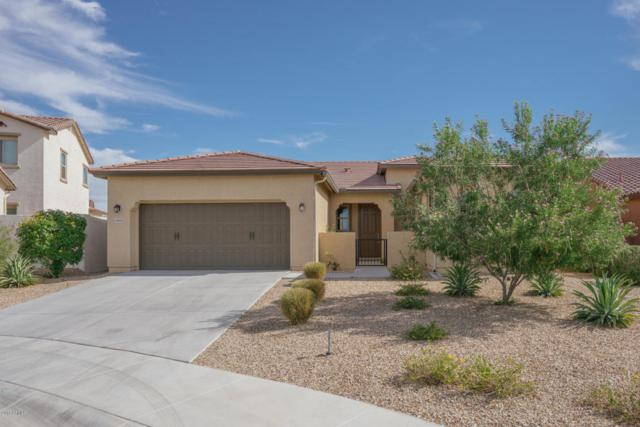 17891 W Badger Way, Goodyear, AZ 85338 (MLS #5781687) :: The Daniel Montez Real Estate Group