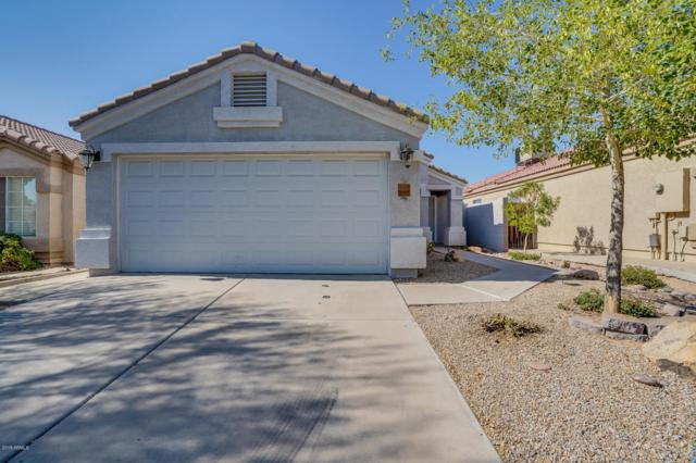 3040 E Blackhawk Drive, Phoenix, AZ 85050 (MLS #5782012) :: My Home Group