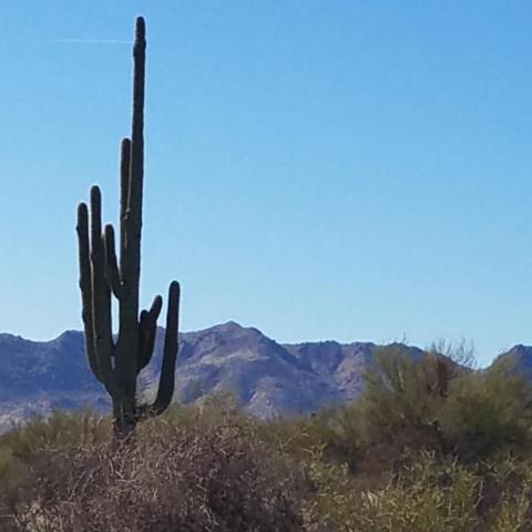 138XX E Windstone Trail, Scottsdale, AZ 85262 (MLS #5783063) :: The Jesse Herfel Real Estate Group
