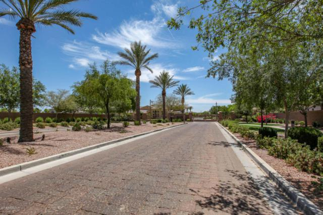 527 W Rio Grande Drive, Chandler, AZ 85248 (MLS #5784866) :: The Wehner Group