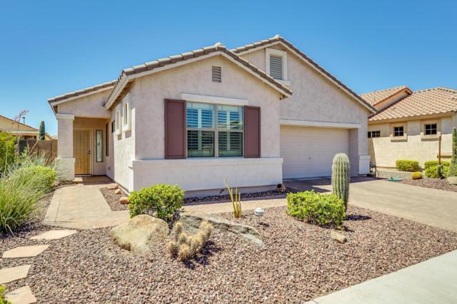 18243 W Buena Vista Drive, Surprise, AZ 85374 (MLS #5789848) :: Desert Home Premier