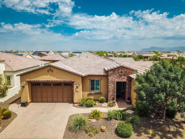 668 E Harmony Way, San Tan Valley, AZ 85140 (MLS #5790941) :: Santizo Realty Group