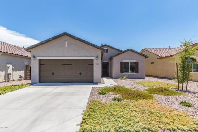 7035 W Candlewood Way, Florence, AZ 85132 (MLS #5792398) :: Riddle Realty
