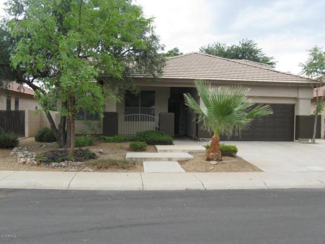 3871 E San Pedro Avenue, Gilbert, AZ 85234 (MLS #5793775) :: The Wehner Group