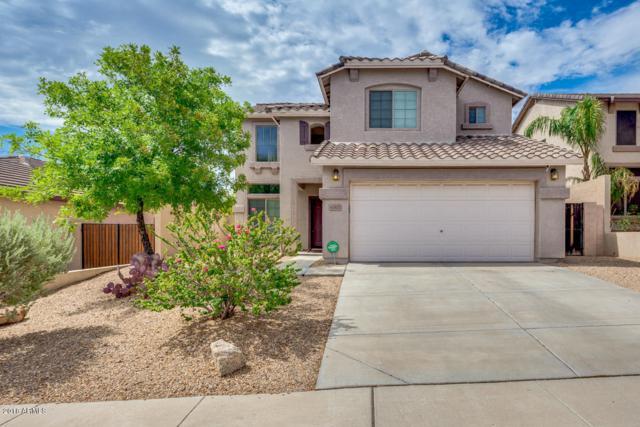 6505 W Yellow Bird Lane, Phoenix, AZ 85083 (MLS #5794622) :: Occasio Realty
