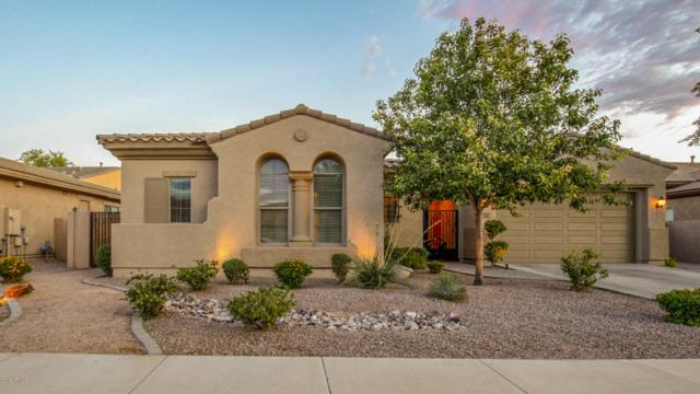 3377 E Raven Drive, Chandler, AZ 85286 (MLS #5795957) :: Lux Home Group at  Keller Williams Realty Phoenix
