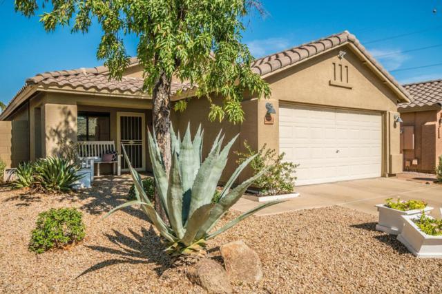 20231 N 34TH Street, Phoenix, AZ 85050 (MLS #5796493) :: Kelly Cook Real Estate Group