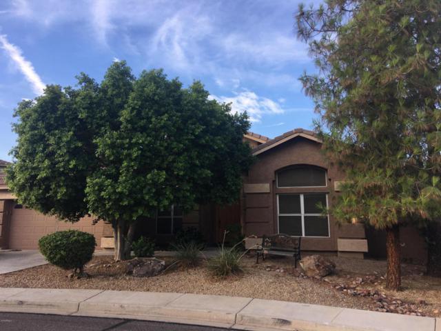 6541 W Via Montoya Drive, Glendale, AZ 85310 (MLS #5796955) :: The Daniel Montez Real Estate Group