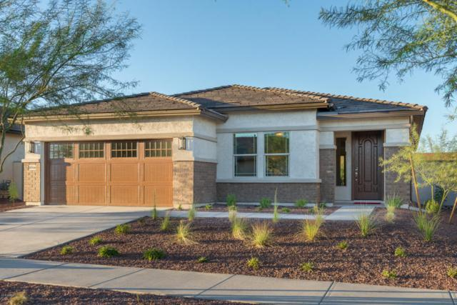 20546 W Park Meadows Drive, Buckeye, AZ 85396 (MLS #5797871) :: Kepple Real Estate Group
