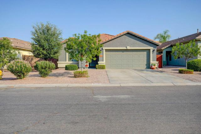 35690 N Belgian Blue Court, San Tan Valley, AZ 85143 (MLS #5801910) :: Yost Realty Group at RE/MAX Casa Grande