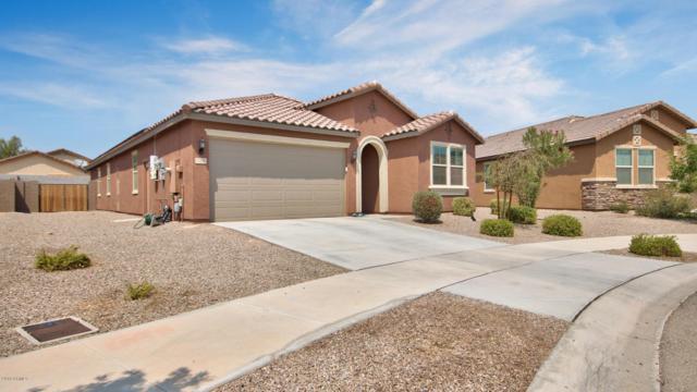 17206 W Gibson Lane, Goodyear, AZ 85338 (MLS #5805853) :: Occasio Realty