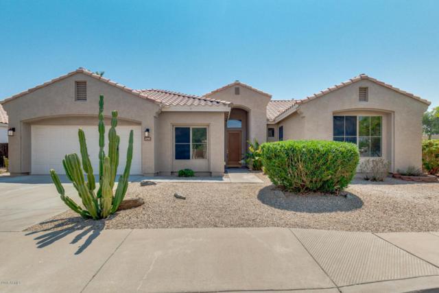 1793 W Lark Drive, Chandler, AZ 85286 (MLS #5806552) :: Power Realty Group Model Home Center
