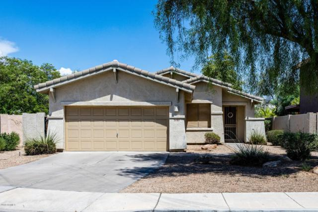 3187 N 142ND Drive, Goodyear, AZ 85395 (MLS #5808913) :: Lux Home Group at  Keller Williams Realty Phoenix