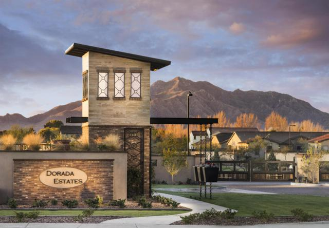17903 E Appaloosa Drive, Queen Creek, AZ 85142 (MLS #5810862) :: Conway Real Estate