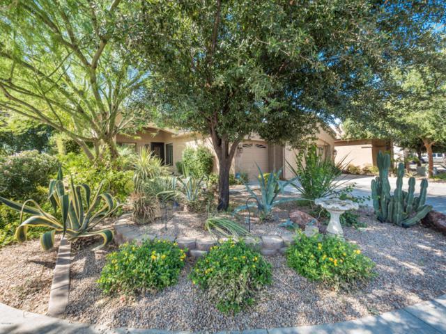 987 E Scorpio Place, Chandler, AZ 85249 (MLS #5818698) :: Keller Williams Realty Phoenix