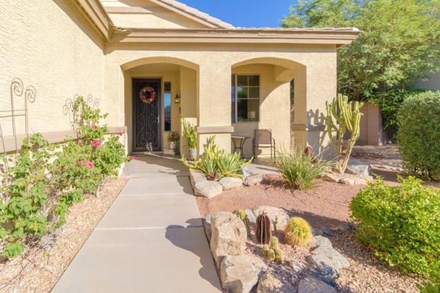 6786 W Evergreen Terrace, Peoria, AZ 85383 (MLS #5821494) :: The Laughton Team