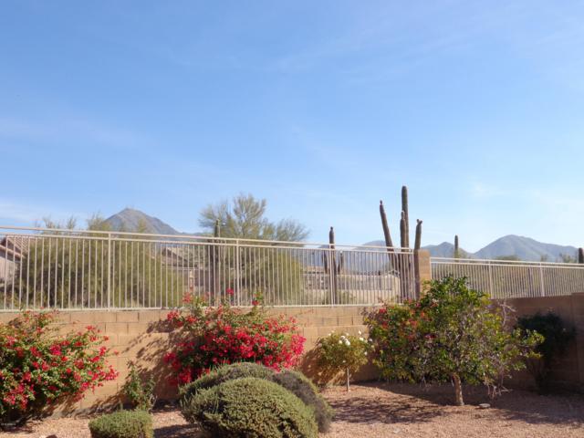 10528 E Salt Bush Drive, Scottsdale, AZ 85255 (MLS #5830126) :: Yost Realty Group at RE/MAX Casa Grande