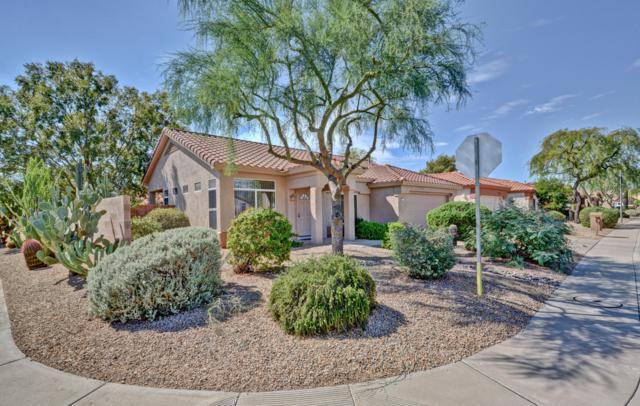 14313 W Domingo Lane, Sun City West, AZ 85375 (MLS #5831561) :: The Jesse Herfel Real Estate Group
