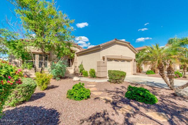502 W Pelican Drive, Chandler, AZ 85286 (MLS #5831768) :: Kepple Real Estate Group