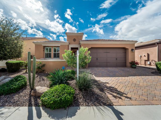 1437 E Elysian Pass, San Tan Valley, AZ 85140 (MLS #5832942) :: Team Wilson Real Estate