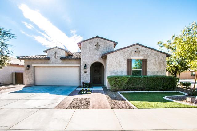 1425 E Ibis Street, Gilbert, AZ 85297 (MLS #5834222) :: HomeSmart
