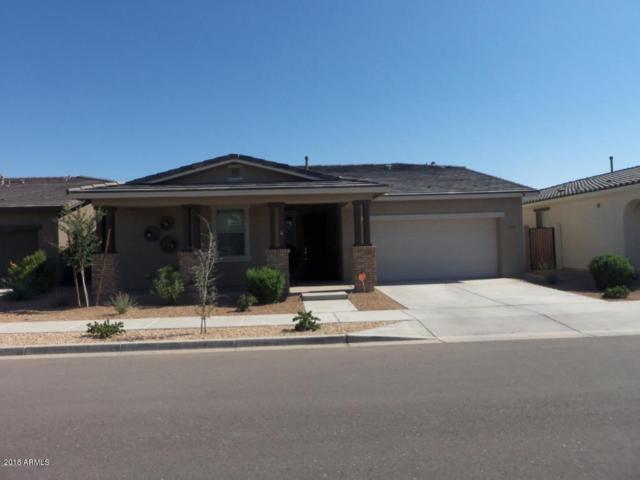 22483 E Munoz Street E, Queen Creek, AZ 85142 (MLS #5835741) :: CANAM Realty Group