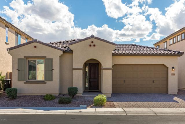 2891 E Citrus Way, Chandler, AZ 85286 (MLS #5838568) :: Team Wilson Real Estate