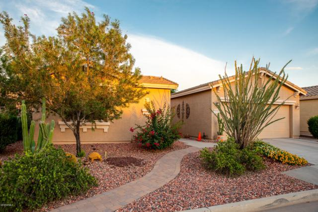 20285 N Enchantment Pass, Maricopa, AZ 85138 (MLS #5839015) :: Lifestyle Partners Team