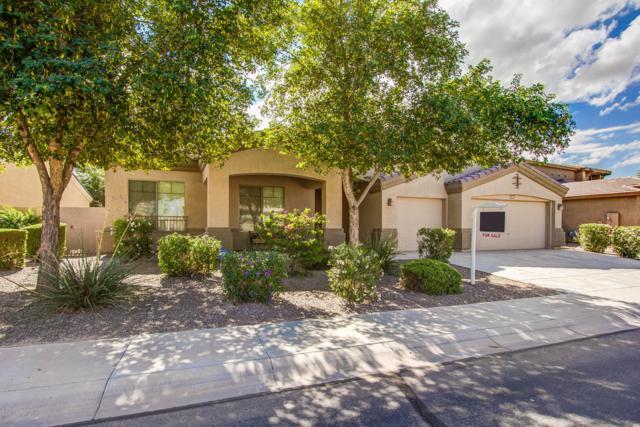 41989 W Carlisle Lane, Maricopa, AZ 85138 (MLS #5839277) :: Yost Realty Group at RE/MAX Casa Grande