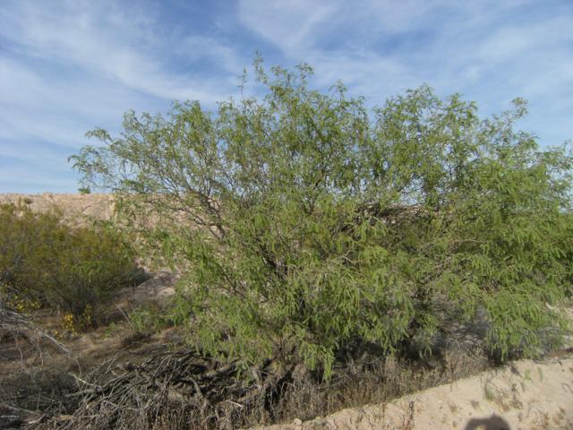 20750 W Creosote Lane, Wickenburg, AZ 85390 (MLS #5839605) :: Riddle Realty Group - Keller Williams Arizona Realty