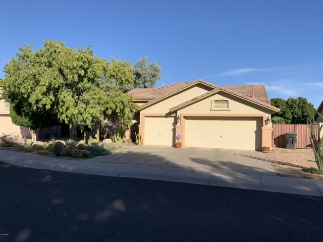 981 N Danyell Drive, Chandler, AZ 85225 (MLS #5842288) :: The Kenny Klaus Team