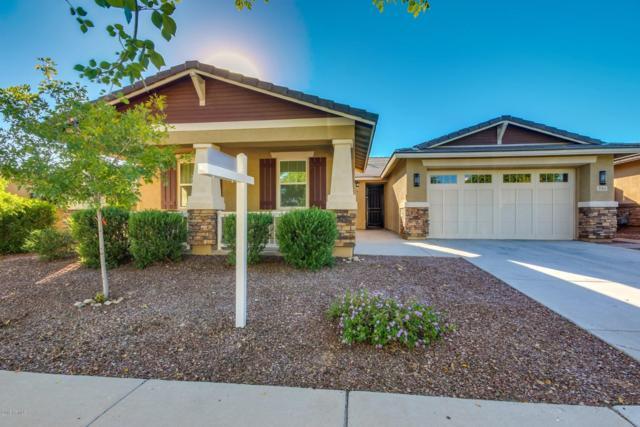 3164 N Springfield Street, Buckeye, AZ 85396 (MLS #5844246) :: The Results Group